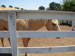 Looking through the fence (BROKEN WING PRODUCTIONS) Tags: horse brown watching winters