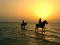 Horses on a Beach (Shakir's Photography) Tags: sunset shadow sea horse sun beach water beautiful yellow dark warm feeling  shanko              relxing
