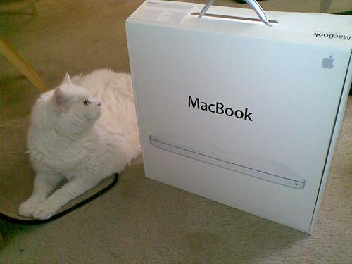 Cat and MacBook