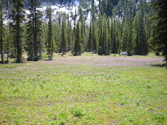 Meadow above upper toketie