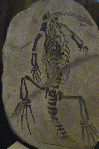 redpath skeleton