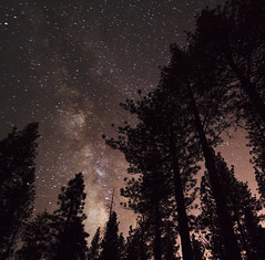Holcomb Valley Stars Trees (Tom Lowe @ Timescapes) Tags: bear trees night way stars 350d big valley milky 1022 holcomb earthandspace Astrometrydotnet:status=failed Astrometrydotnet:id=alpha20090206747700