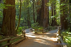 Redwoods - John Muir Woods - Fork in the Trail (Darvin Atkeson) Tags: california park usa color monument nature rain america forest john us woods nikon rainforest san francisco natural d70 nikond70 conservation trail coastal muirwoods national redwoods muir trials johnmuir nationalmonuments darvin californiaredwoods outdoorphotography perservation atkeson californiaphotography outdoorphotographer  darv californiaphotographer californiaparks   liquidmoonlightcom liquidmoonlight