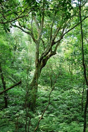 一顆很美的樹