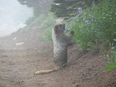 Critter #1 - flowers... standing ovation (yum yum)