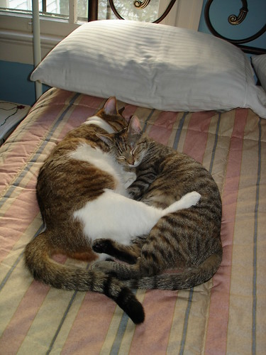 Kittens2 007