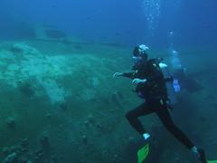 """Alfie aproximándose al """"Cedar Pride"""" (copepodo) Tags: fauna redsea diving pride jordan cedar wreck aqaba buceo jordania submarinismo pecio marrojo"""