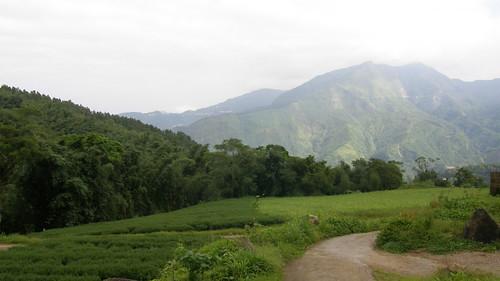 41.茶園與壯闊的高山