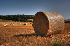 Bailed (Cathy G) Tags: field winterwheat bales bailed odiham hampshire canon40d canon hdr shadow round bound hay