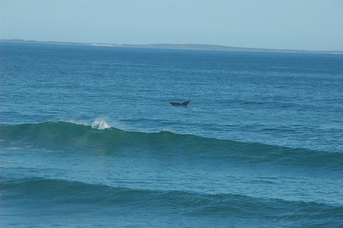 Whale Tail near Voelklip (by Louis Rossouw)