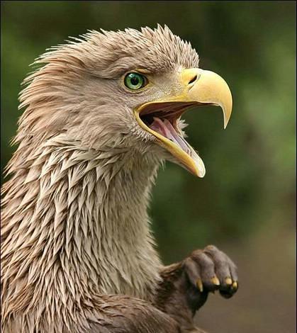 حيوانات وطيور لم تشاهدها من قبل  ( فوتوشوب ) 2823450166_af582b2516.jpg?v=0