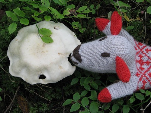 Kindakirjas lammas