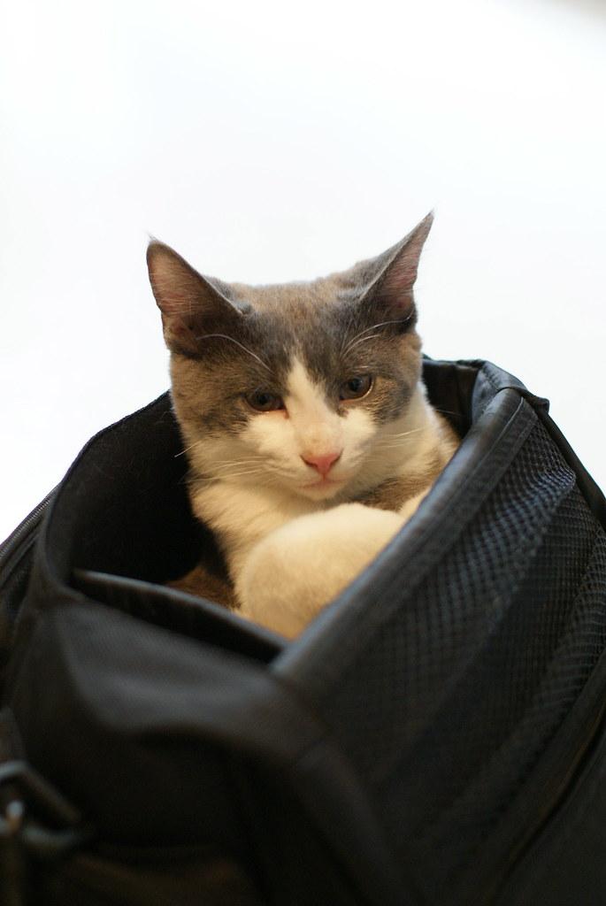 Bag Boy Again