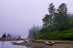 Misting the Pacific Northwest Coast (Fort Photo) Tags: vacation mist beach nature misty fog landscape outdoors coast washington nationalpark log nikon rainforest pacific northwest nps pacificnorthwest wa layers sitka olympic rubybeach olympicnationalpark pnw spruce d300 naturesfinest 2008reunionnature