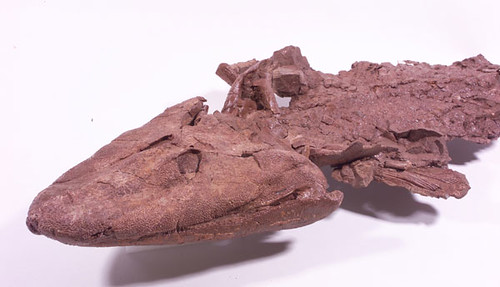 Tiktaalik the Fishapod