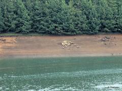 shore (thanver) Tags: lake stones shore tress