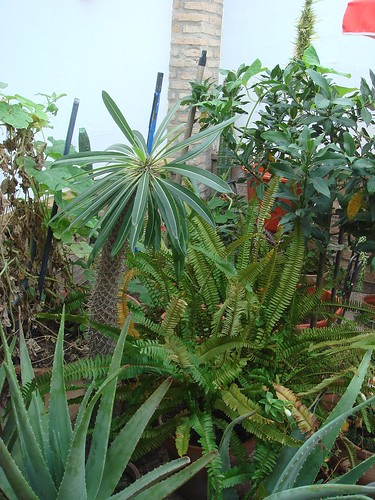 Mis plantas y sus flores 2955735794_11dcb7028e