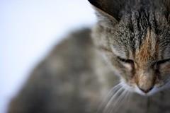 Resting in Peace (whitneybee) Tags: cats animals cat chelsea bokeh ugc restinpeace dadshouse sortof blartsy