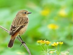 #344  (John&Fish) Tags: wild bird nature wow taiwan vivid best specanimal colorphotoaward flickrdiamond birdsphotos ishflickr overtheexcellence colourartaward pigawards lesamisdupetitprince
