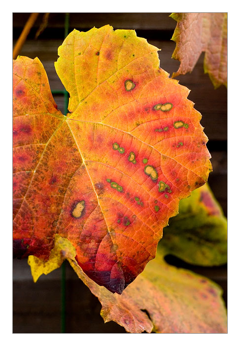 http://farm4.static.flickr.com/3163/3014700651_7a4649beb7_o.jpg