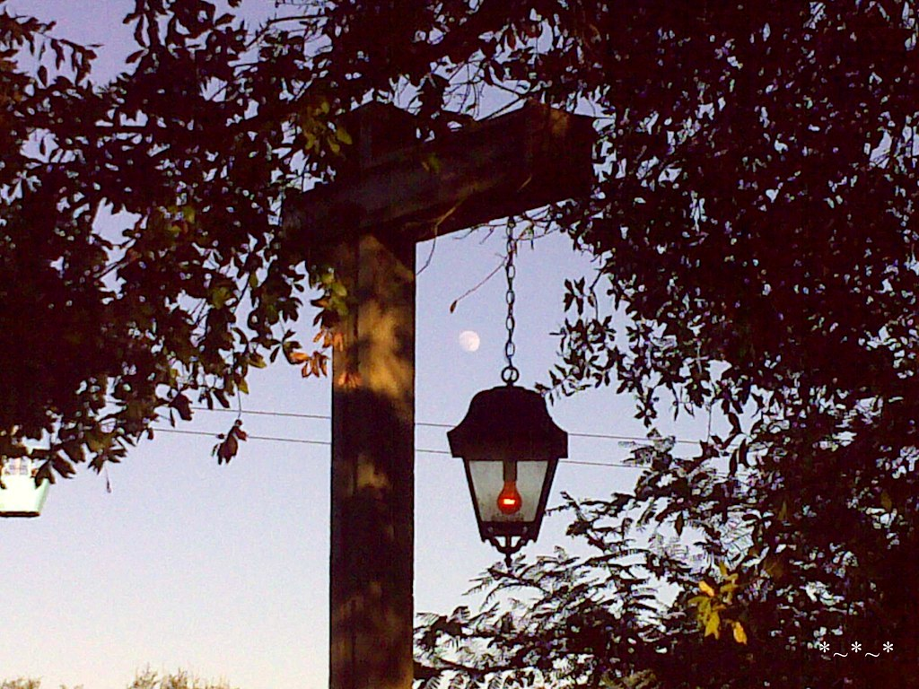 11102008192-Moon-Over-Busch-Gardens-Tampa
