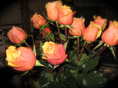 Birthday Roses From Holly (Day 14 b)