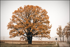 Tree (LutzSchramm) Tags: autumn fall herbst brandenburg havelland semlin treesubject