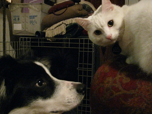 """""""Do I have to put up with this Dog?"""""""