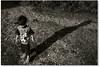 """""""Mede a altura do teu espírito... (Fabiana Velôso) Tags: luz sombra explore criança filho filhote menino pequeno duetos fabianavelôso"""