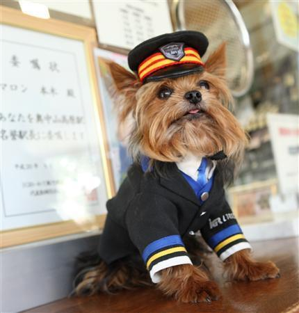 Maron Stationmaster Dog at Okunakayama-Kougen Station