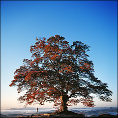 love tree (yein~) Tags: morning portrait tree 120 6x6 tlr film nature girl beautiful rolleiflex mediumformat square kodak slidefilm squareformat e100vs sook 50faves 25faves 40fw aplusphoto goldenvisions