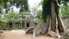 사원과 나무