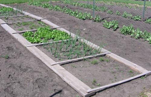 Block Planting Experiment