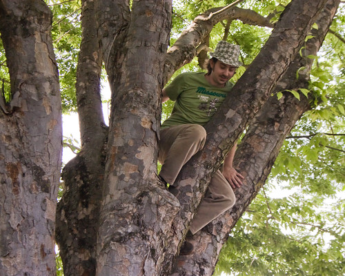 Boy in the Tree