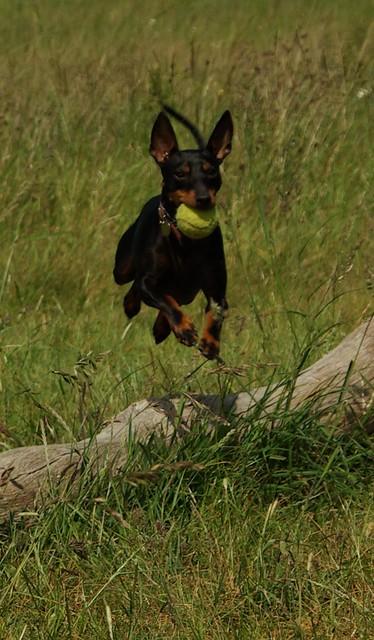 Draco Jumping