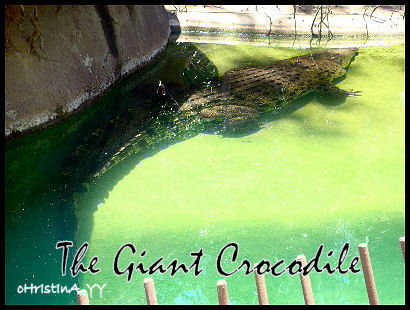 The Giant Crocodile