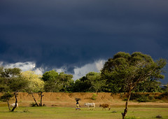 Storm brewing on Chettinad - India (Eric Lafforgue) Tags: sky cloud india landscape cow democracy indie indi indien thunder hind indi inde hodu southasia indland  hindistan indija   ndia hindustan  karaikudi 8157  lafforgue   ericlafforgue hindia  bhrat  indhiya bhratavarsha bhratadesha bharatadeshamu bhrrowtbaurshow  hndkastan