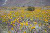 9716 Henderson Cyn Rd Wildflowers