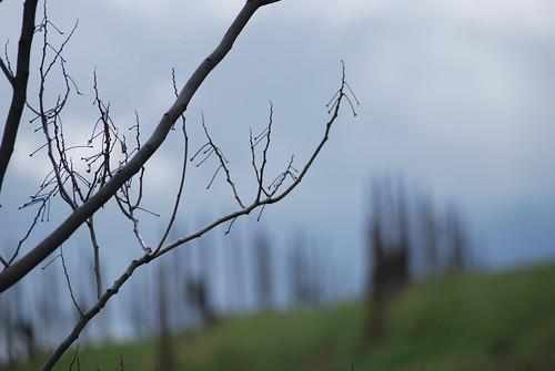 Distant grapes