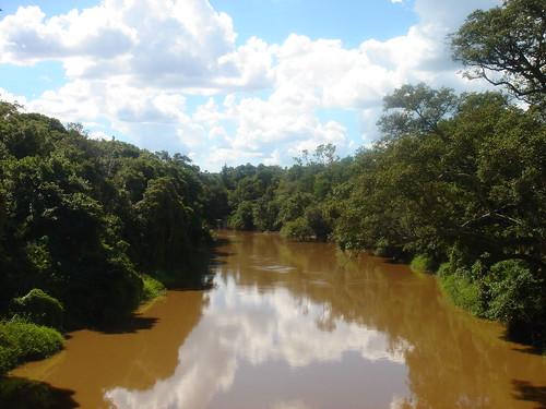 Zone marécageuse du coté de Clorinda (Province de Formosa)