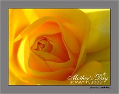 I Love You MOM. (mAAn.Usman) Tags: pakistan macro classic love beautiful rose yellow mother super 11 card mothersday masterpiece may11 faisalabad aplusphoto