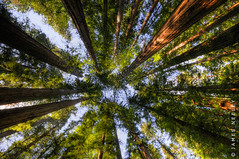 Tall Timbers (James Neeley) Tags: california trees nature bravo wideangle redwoods stoutgrove hdr crescentcity 5xp jamesneeley vision100 flicke8
