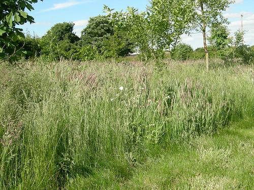 nice meadow