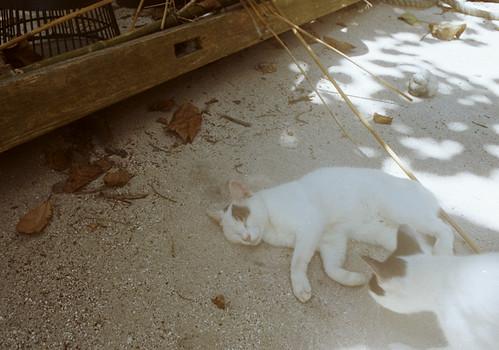 カイジ浜の猫の寝顔
