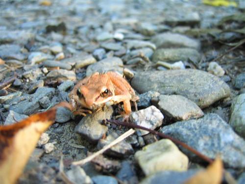 Frogger again
