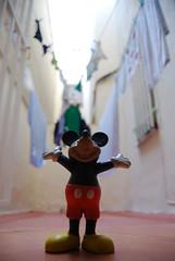 """""""Soy el rey del mundo"""" (.Xris.) Tags: madrid toy mouse spain mickey rey pequeño juguete xris reydelmundo jugueteperro juguetegoma asongforthedead"""