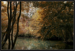 Tavers (coucor1) Tags: blue nature water automne river landscape rivire paysage arbre eaux loiret tavers bleues aplusphoto naturewatcher vosplusbellesphotos