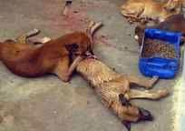 Kinship Circle - 2008-07-28 - JULY KC DIGEST 10 - Brazil - End Animal Tests