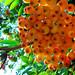 Rowanberries (rönnbär) (5148)