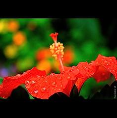 Les jours de pluie...!!!